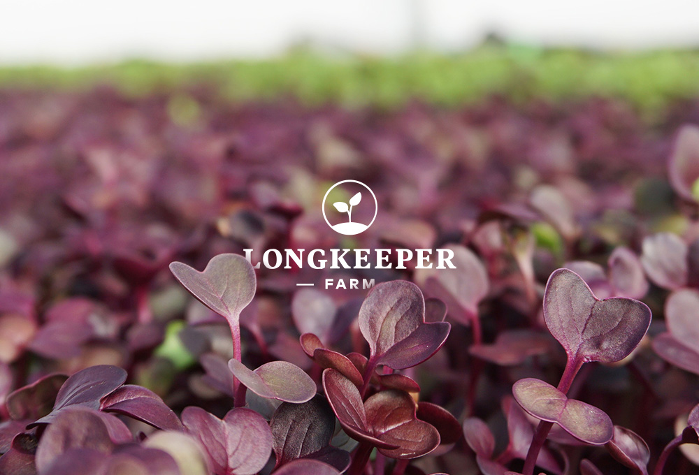 Horticultural food grower website design example
